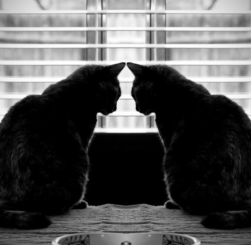 2014_01_11_018_mirror