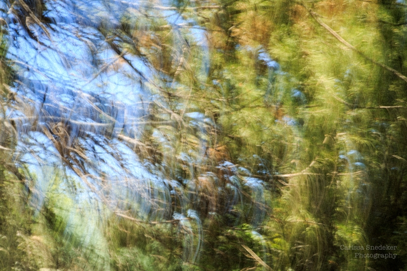PineMotionBlur-1
