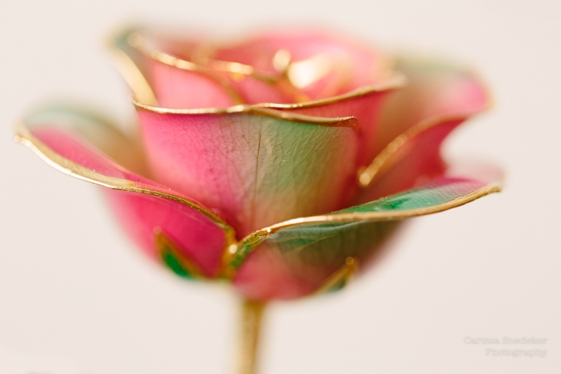 Dipped Rose-1