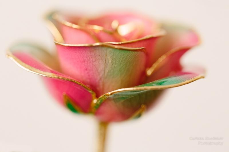 Dipped Rose-1